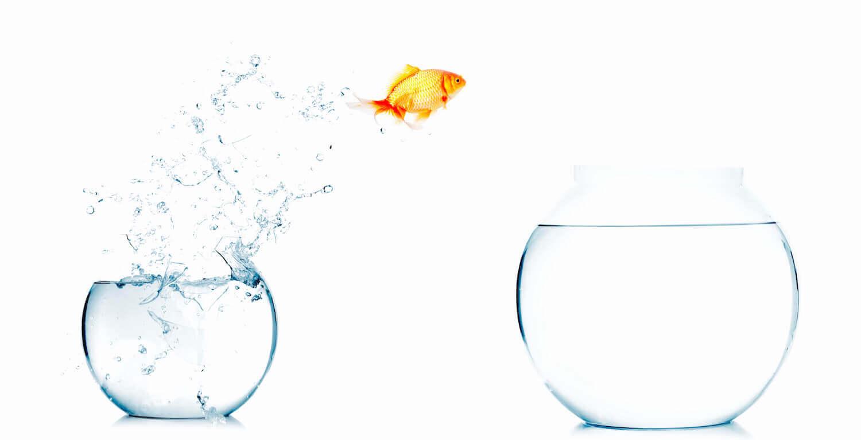 Führungsposition - einzeln üben für den Erfolg